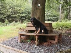"""Hübsche Sitzbank an der """"Sachseneiche"""" mitten im Wald"""