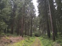 Der Fichten- und Kiefernwald hier sieht gesund aus
