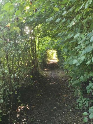 Licht am Ende des Pflanzentunnels