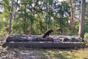 Doxi auf einem der zahlreichen Sprunghindernissse für Reiter