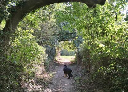 Hohlweg beim Abstieg ins Rotthäuser Bachtal