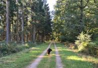 Hinter Schmithof laufen wir durch den Wald in Richtung Raeren
