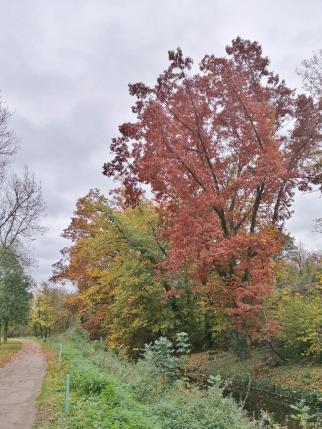 Bäume am Nordkanal in Neuss