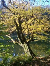 Herbstfärbung am Uferweg