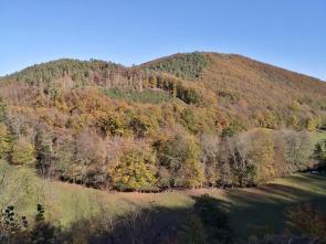 Bunter Wald auf den Hängen oberhalb des Kalltal