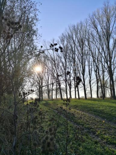 Tief steht die Sonne jetzt Ende November bereits am Mittag