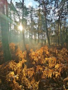 Herrlich, wie das Sonnenlicht den Wald durchflutet