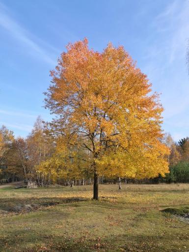 Noch tragen die Bäume ihr buntes Herbstkleid
