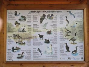 Vogelarten am Unterbacher See und am Elbsee