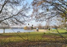 Nilgänse bevölkern die Rasenflächen im Nordbad des Unterbacher Sees