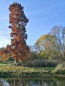 Prächtige Bäume im Schlosspark an der Niers