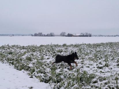 Doxi tollt begeistert durch den Schnee
