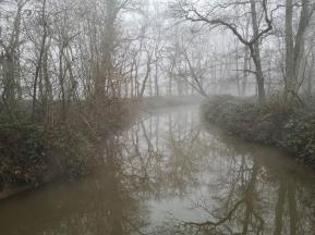 Der Erftgraben im Reuschenberger Wald
