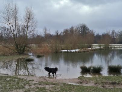 Doxi testet die Wasserqualität im Rheinpark