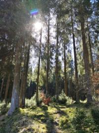 Herrlich, wie die Sonne den Wald erleuchtet