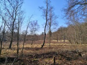 Heidefläche im Hildener Stadtwald