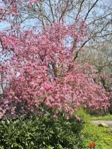 Frühlingsbüte in Satzvey