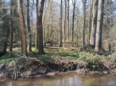Die Auen links und rechts des Flusses werden von zahlreichen Wasserfälchen durchzogen