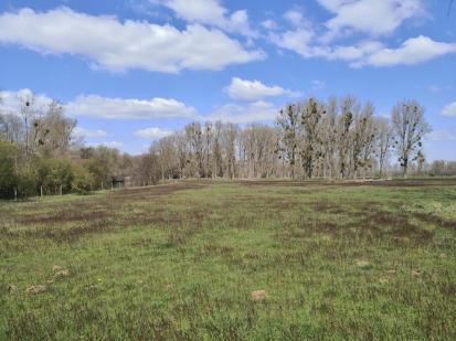 Feuchtwiesen rechts der Rur