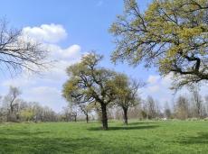 Wiesenflächen hinter dem Rheindeich