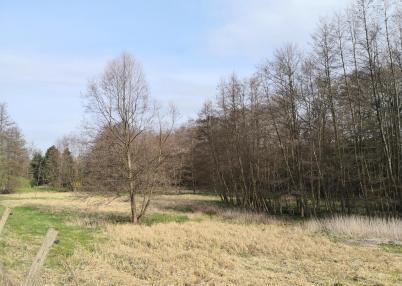 Feuchtwiesen im Hasselbachtal