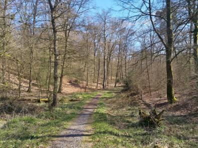 Im Tüschenwald