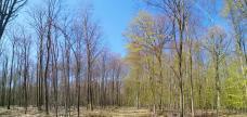 Links ist der Wald noch im Winterschlaf, rechts hat der Frühling bereits seine magische Kraft entfaltet