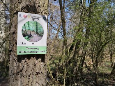 Mehrere bekannte Wanderwege kreuzen den Wald