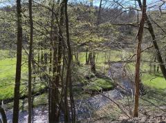 Leise plätschernd mäandert der Eifgenbach durch sein Tal