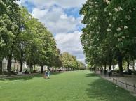 Blühende Kastanienbäume entlang der Poppelsdorfer Allee