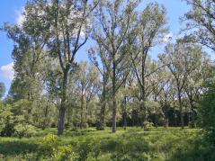 Im Gustorfer Wald