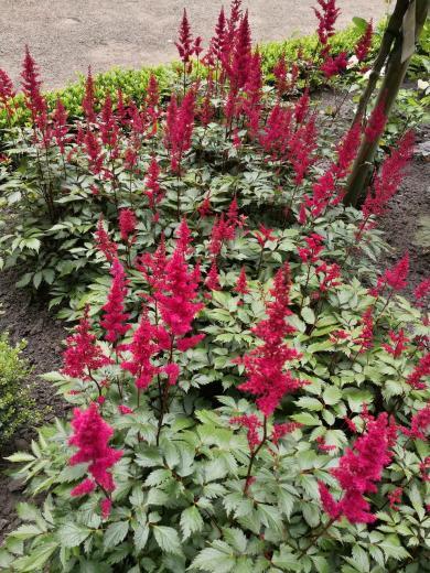 Pittoreske Pflanzen in den Grünanlagen hinter dem Schloss