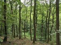 Wir laufen durch schönen grünen Eichenwald