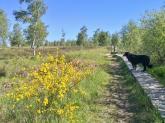 Stege durchziehen das Heide- und Moorgebiet