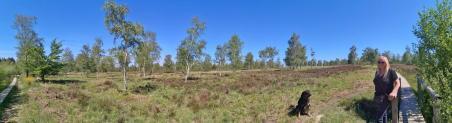 Auf dem nährstoffarmen Heideboden gedeihen vor allem Birken
