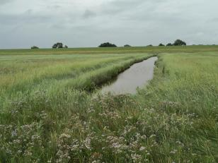 Siele durchziehen die Uferwiesen