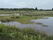 Moor entsteht, indem Morrgras in Tümpeln nach oben wächst und auf seiner Unterseite langsam abstirbt.