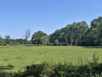 Wald- und Feldflächen hinter dem Schloss