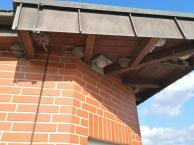 Unter dem Dach des Infopavillons nisten Schwalben