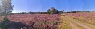 Panoramabild aus der Heide