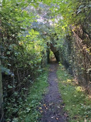 Tunnelweg am Rande des Plolders Hasenfeld