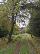 Der Soonwald ist größtenteoils Mischwald
