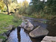 Doxi testet die Wasserqualität des Kallenbachs