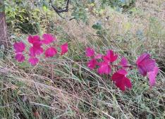 Was sind das denn für hübsche Blätter?