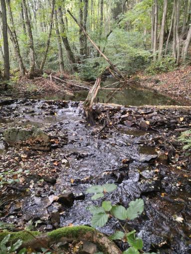 Der Steinbach hinter Langweiler kurz vor dem Zufluss in die Talsperre