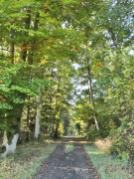Bei Sonnenschein wirkt der Wald hier fast noch frühlingshaft