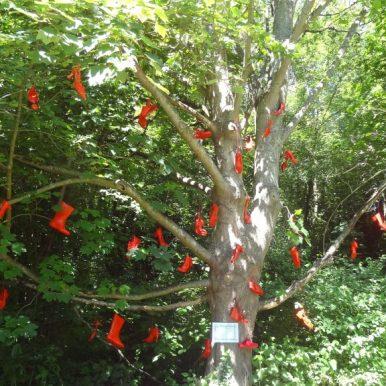L'arbre à bottes
