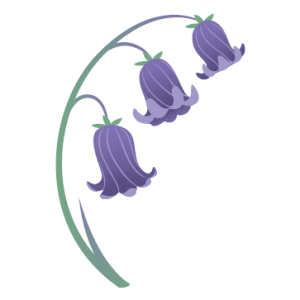 A drawn bluebell