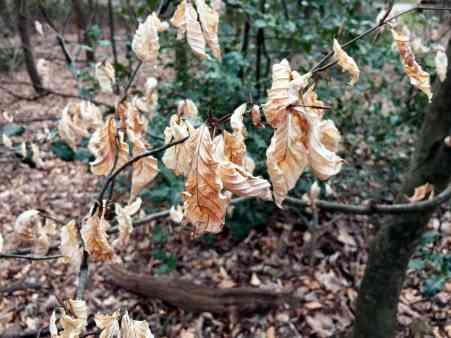 tote Blätter