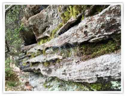 Fels mit Spinnweben